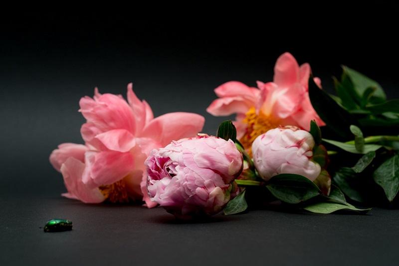 Profumi fioriti 2