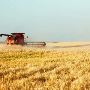 Proprietà dell'olio di germe di grano
