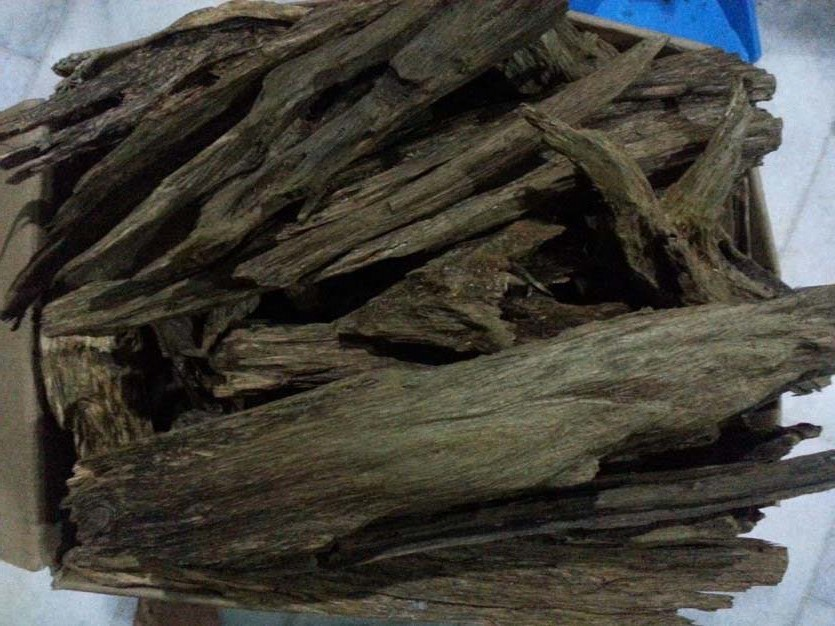 Oud, resina estratta dall'albero Aquilaria